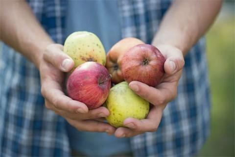 Sản phẩm hữu cơ - xu thế của nông nghiệp hiện đại